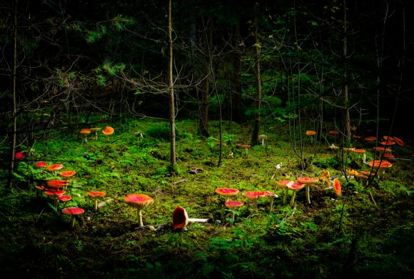 A fairy ring in the forest