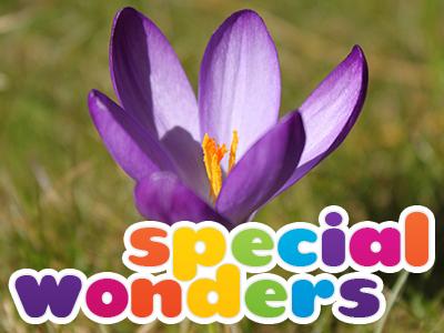 Special Wonders